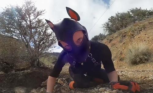 Roadwork-Puppy-Edition---03.23.20_m.jpg