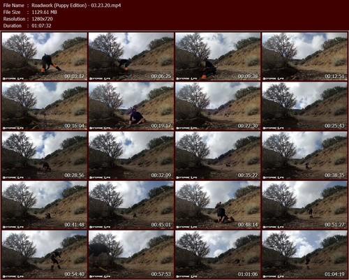 Roadwork-Puppy-Edition---03.23.20.t_m.jpg