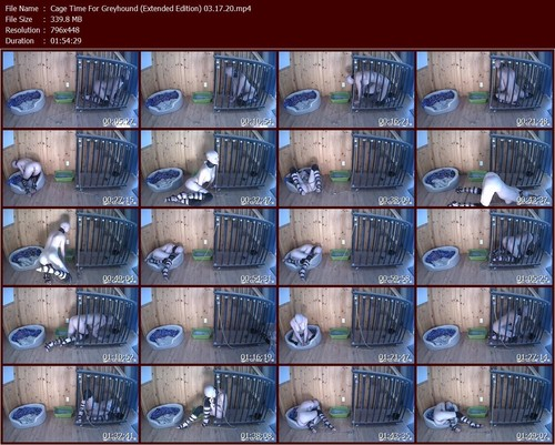 Cage-Time-For-Greyhound-Extended-Edition-03.17.20.t_m.jpg