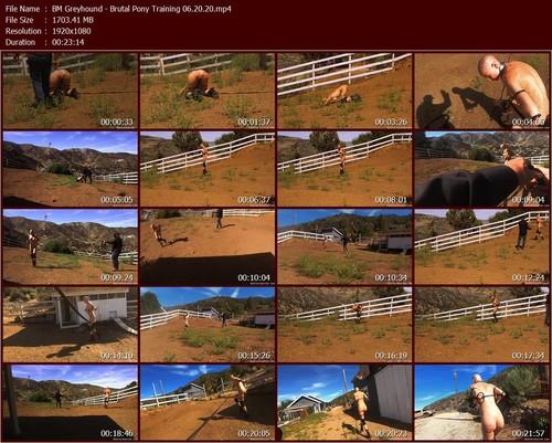 BM-Greyhound---Brtal-Pony-Training-06.20.20.t_m.jpg