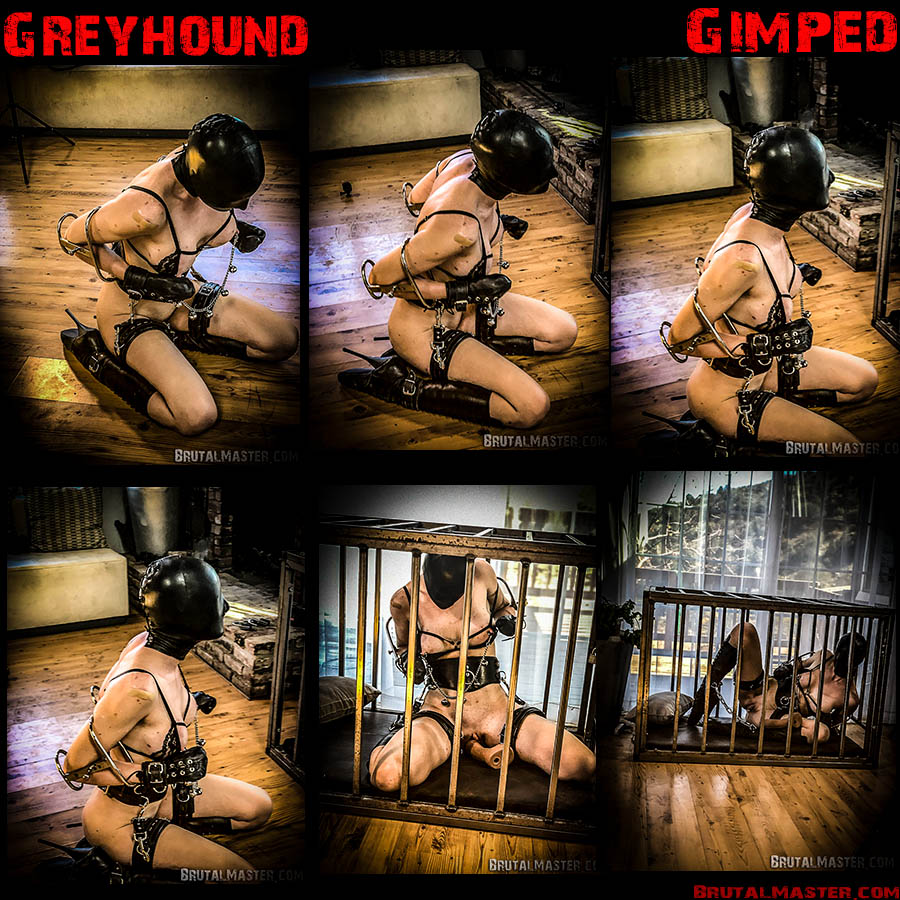 Greyhound with Rachel Greyhound (BrutalMaster) [MPEG-4]