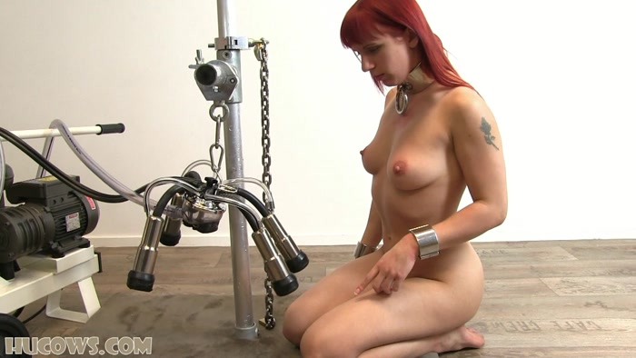 Cow milking machine on woman pics