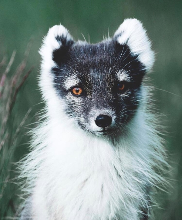 fox37,