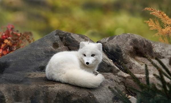 fox21,