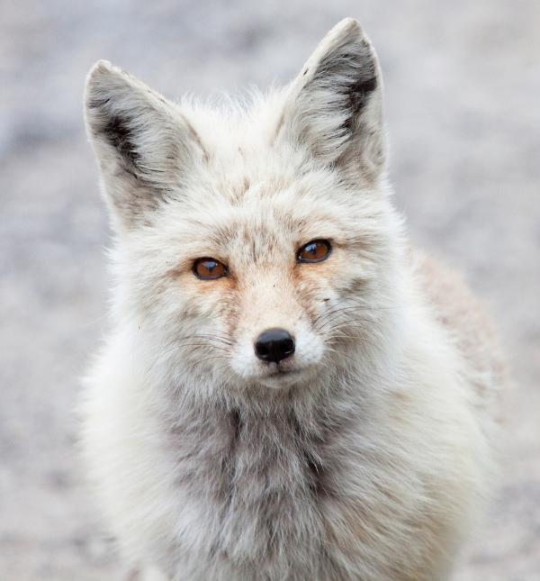 fox55,