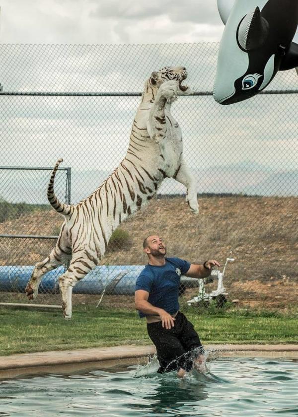 tigerJump,