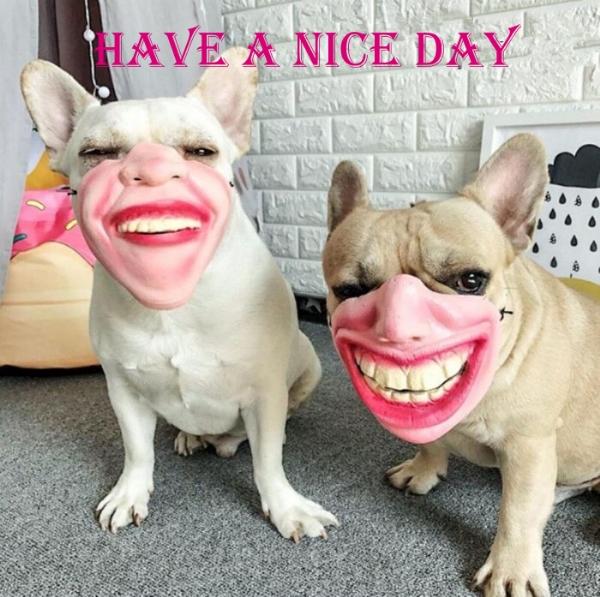 HaveANiceDay-Dogs,