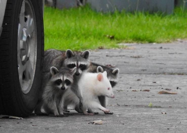 f-coons,