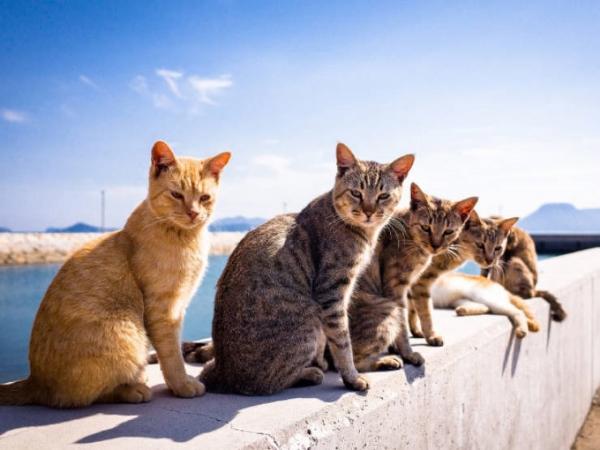 Cats4,
