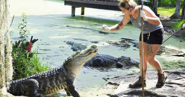 gator20,